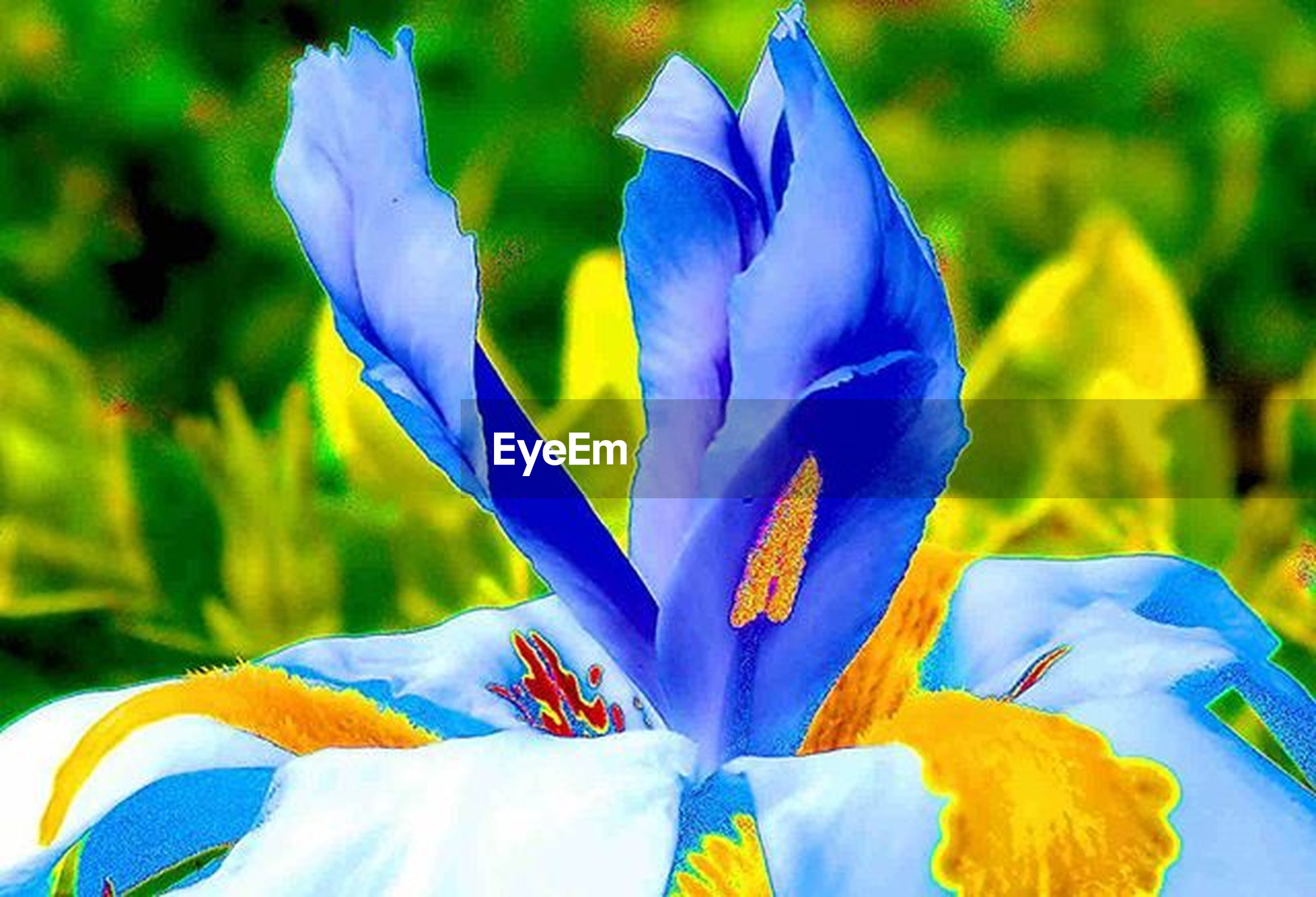 petal, flower, focus on foreground, blue, close-up, fragility, flower head, freshness, purple, beauty in nature, nature, day, multi colored, outdoors, no people, blooming, growth, sunlight, white color, selective focus