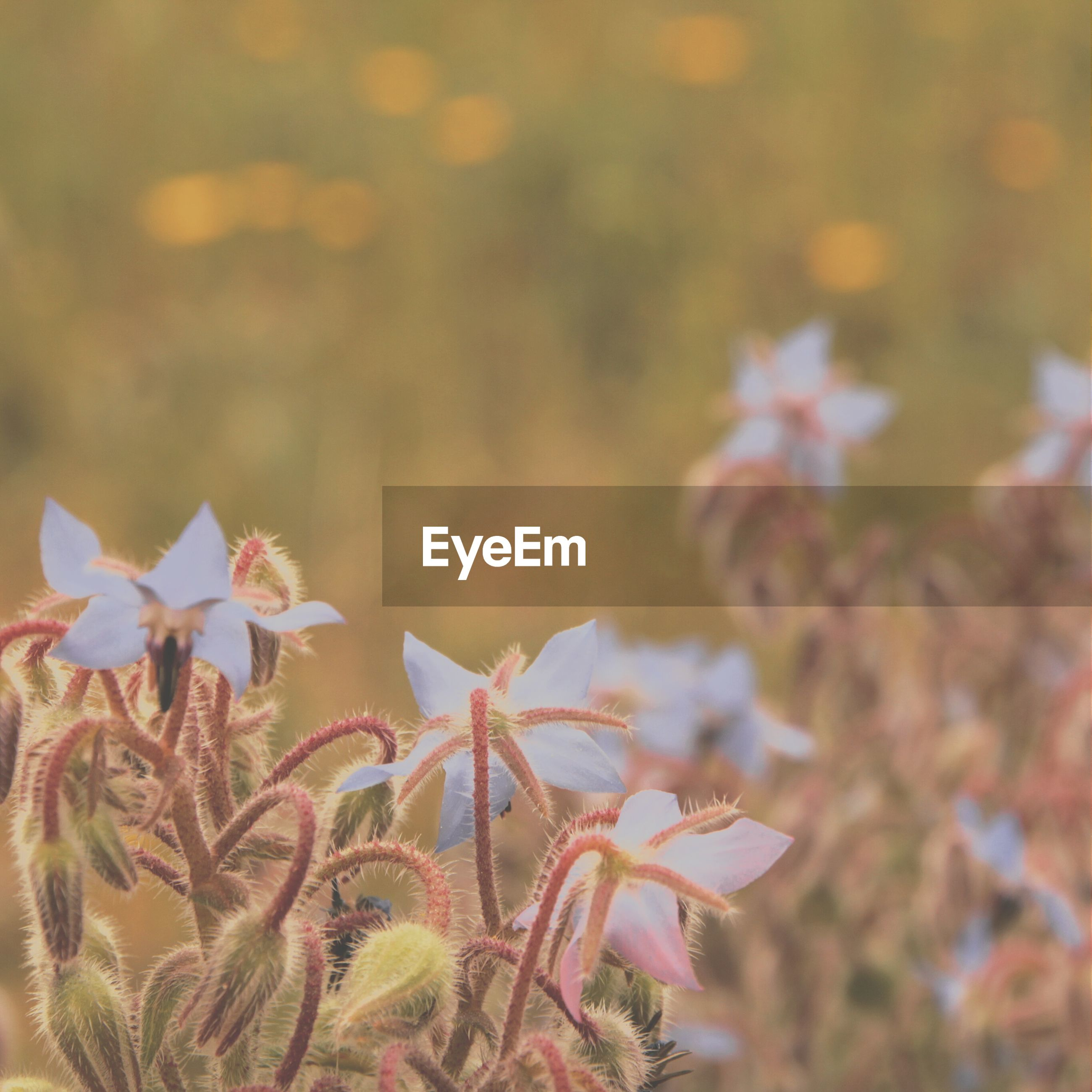 flower, freshness, petal, fragility, growth, beauty in nature, flower head, plant, focus on foreground, close-up, nature, blooming, in bloom, pink color, selective focus, stem, outdoors, day, botany, no people