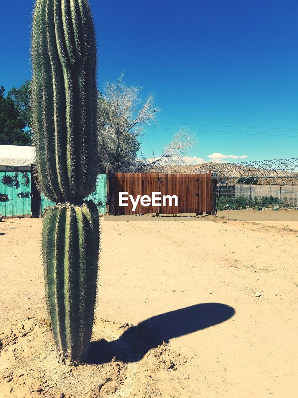cactus, succulent plant, sunlight, shadow, nature, sky, land, blue, day, desert, saguaro cactus, no people, arid climate, field, growth, clear sky, climate, plant, sand, thorn, outdoors, wooden post