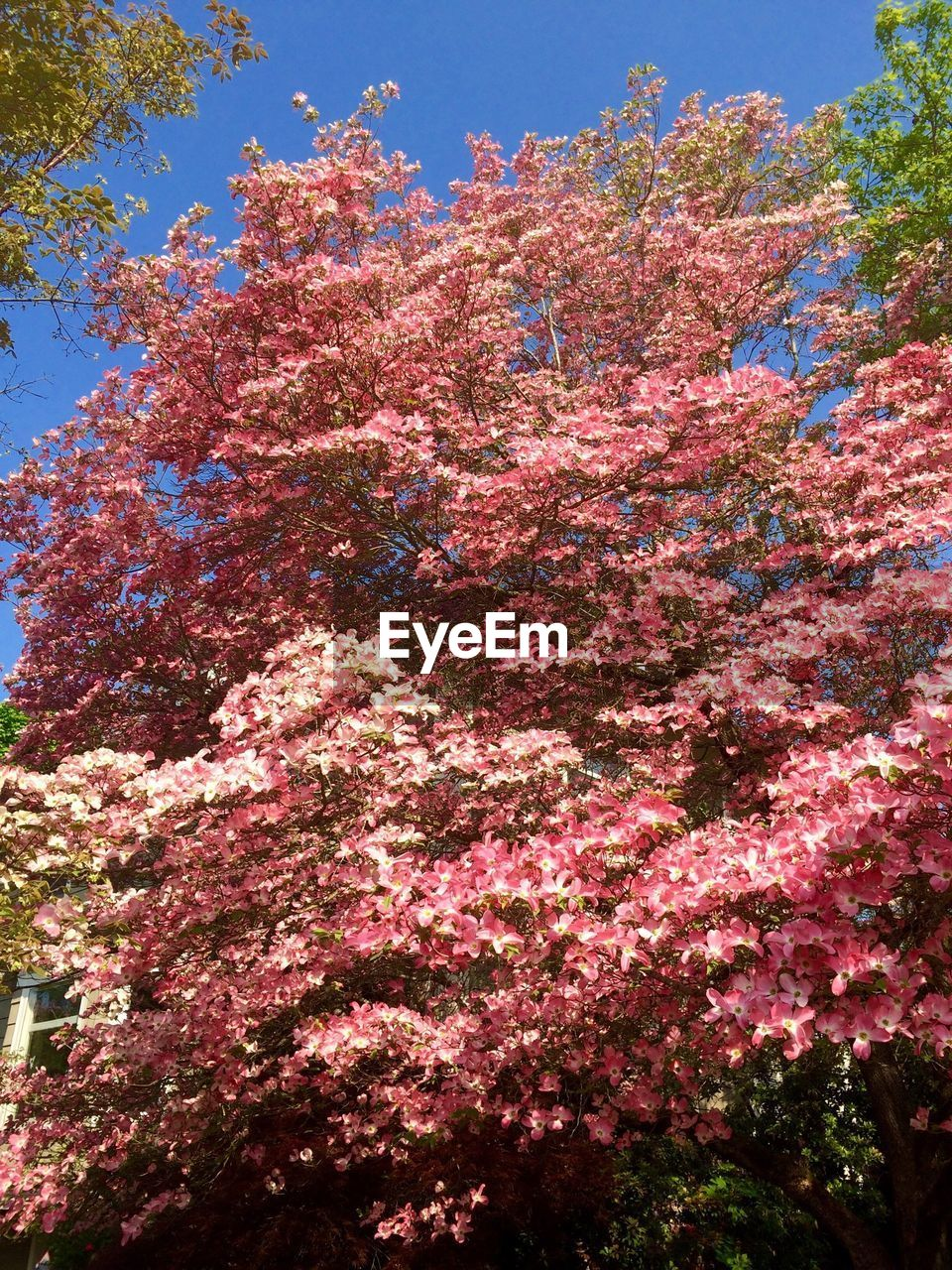 tree, beauty in nature, flower, growth, low angle view, nature, blossom, pink color, branch, day, no people, springtime, freshness, fragility, outdoors, tranquility, sky, close-up