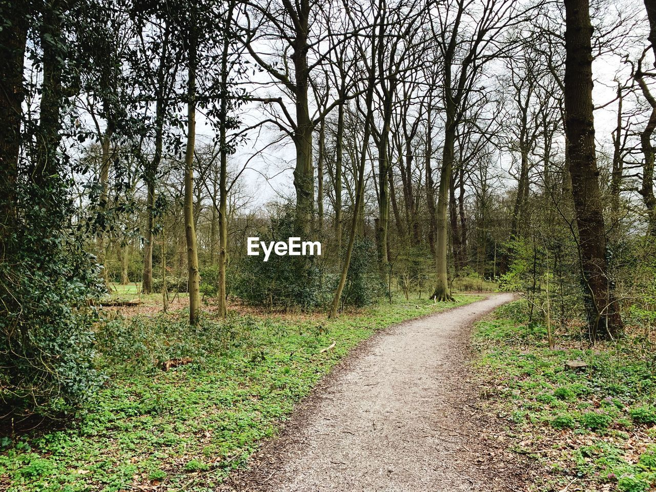 tree, plant, forest, land, the way forward, direction, tranquility, tranquil scene, no people, nature, road, non-urban scene, beauty in nature, day, woodland, growth, trunk, tree trunk, scenics - nature, dirt, outdoors, diminishing perspective, trail