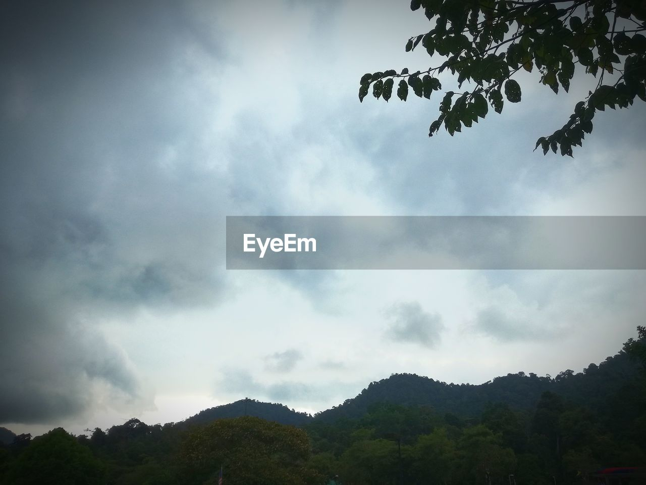 tree, sky, nature, day, low angle view, beauty in nature, outdoors, cloud - sky, scenics, no people, tranquility, mountain