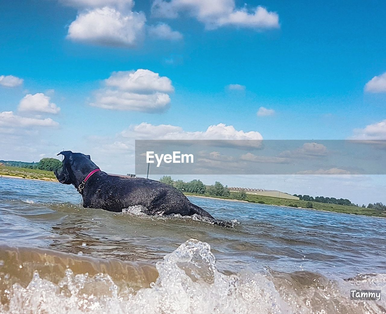 dog, pets, cloud - sky, domestic animals, water, one animal, animal themes, mammal, sky, beach, outdoors, day, sea, no people, nature