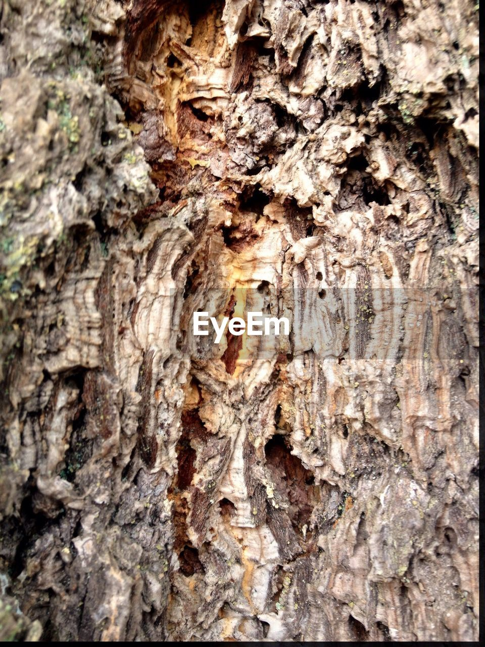 textured, tree trunk, tree, close-up, bark, rough, wood - material, nature, no people, full frame, day, outdoors, knotted wood, backgrounds, wood grain