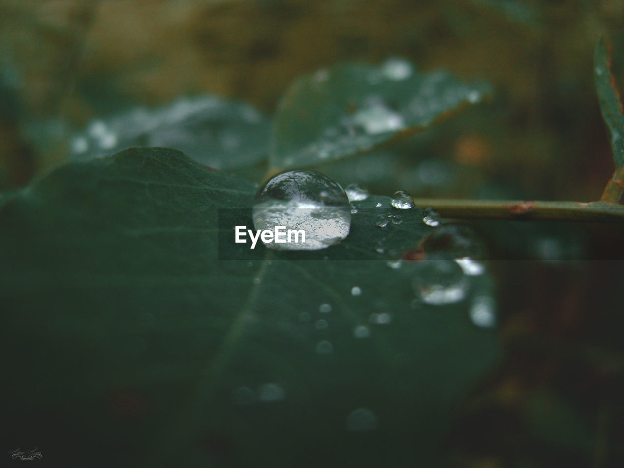 drop, leaf, selective focus, close-up, nature, fragility, no people, beauty in nature, outdoors, day, water, growth, plant, freshness