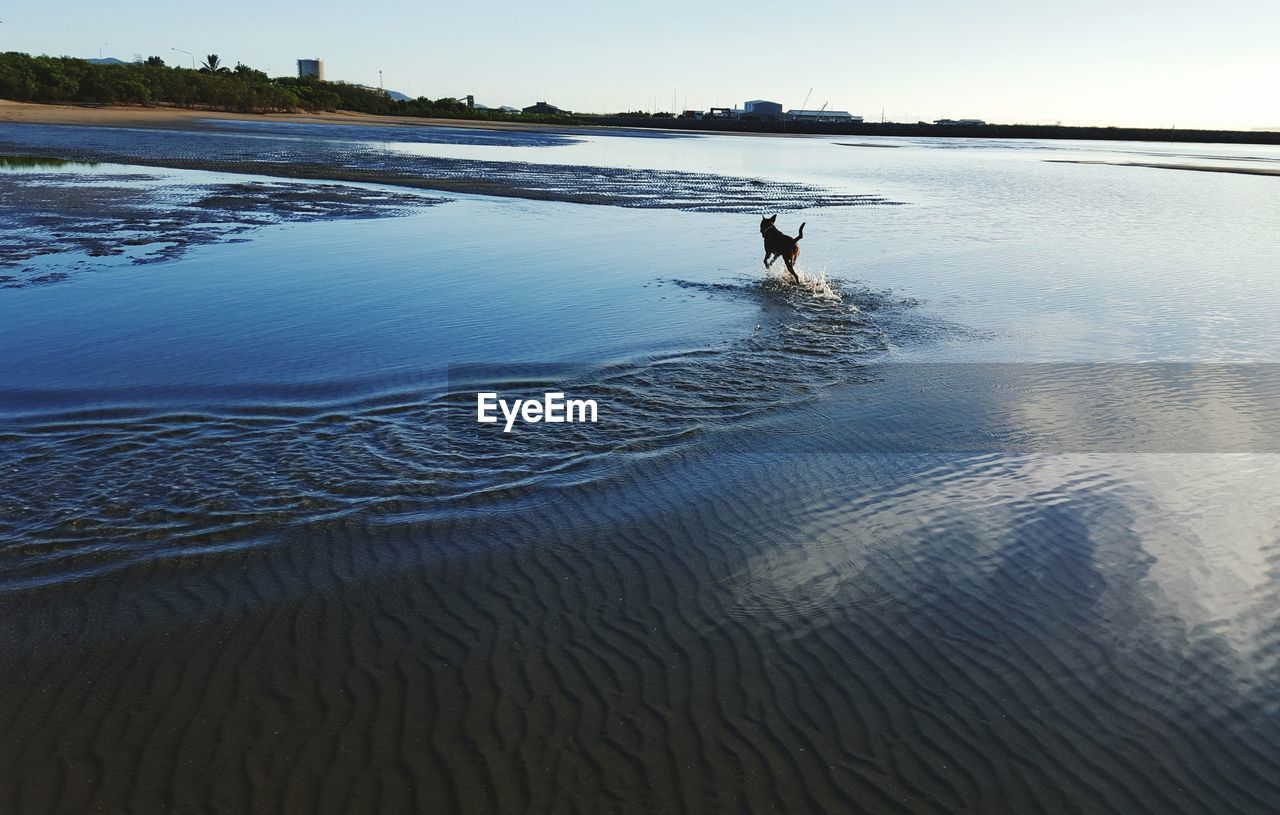 Dog playing at beach against sky
