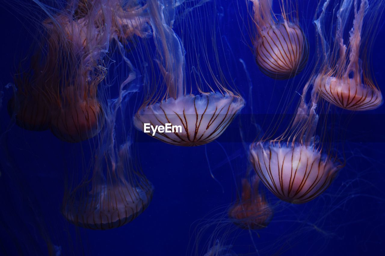jellyfish, underwater, sea life, swimming, water, no people, close-up, floating in water