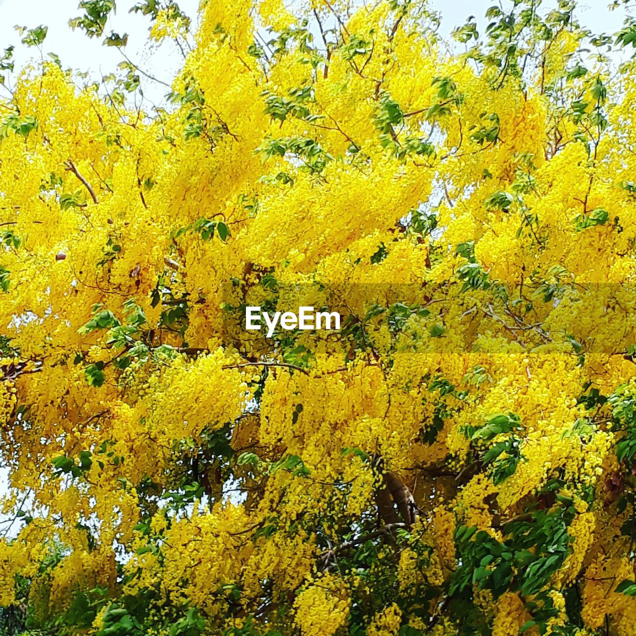 yellow, growth, nature, flower, beauty in nature, day, leaf, autumn, plant, tree, outdoors, no people, fragility, change, freshness, close-up, sky