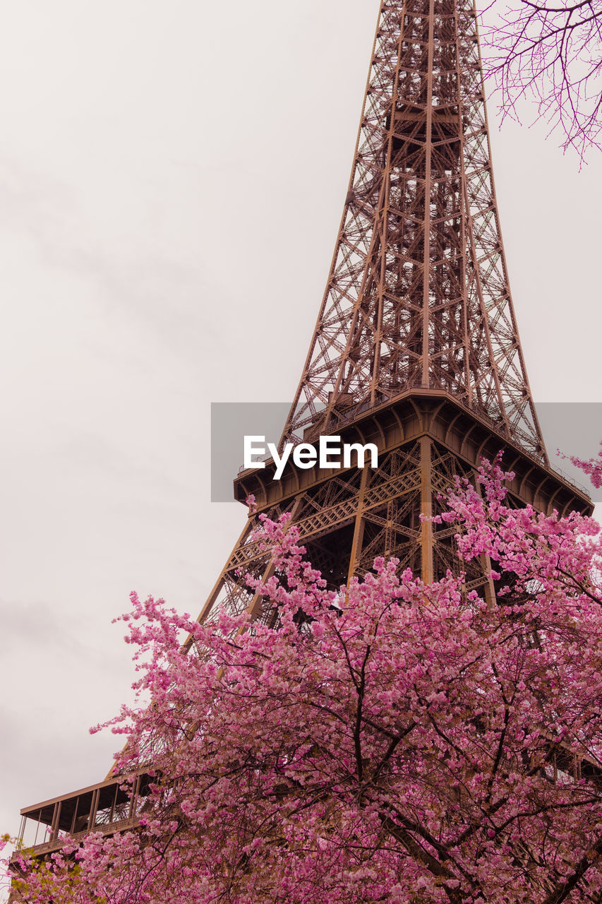 plant, architecture, built structure, flowering plant, sky, low angle view, flower, nature, tall - high, pink color, tree, blossom, growth, building exterior, tower, no people, beauty in nature, day, travel destinations, outdoors, springtime, cherry blossom, purple, cherry tree