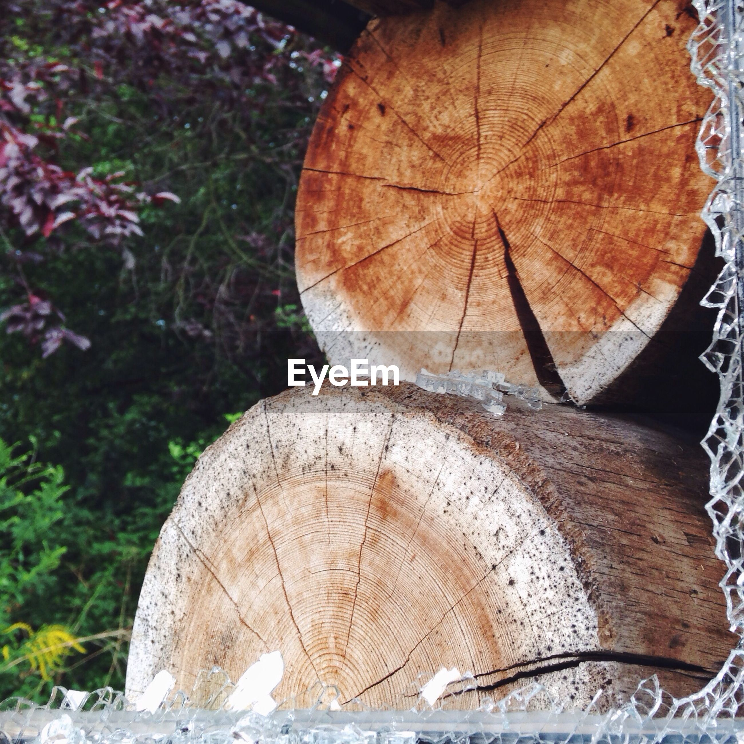 Close-up of logs in field