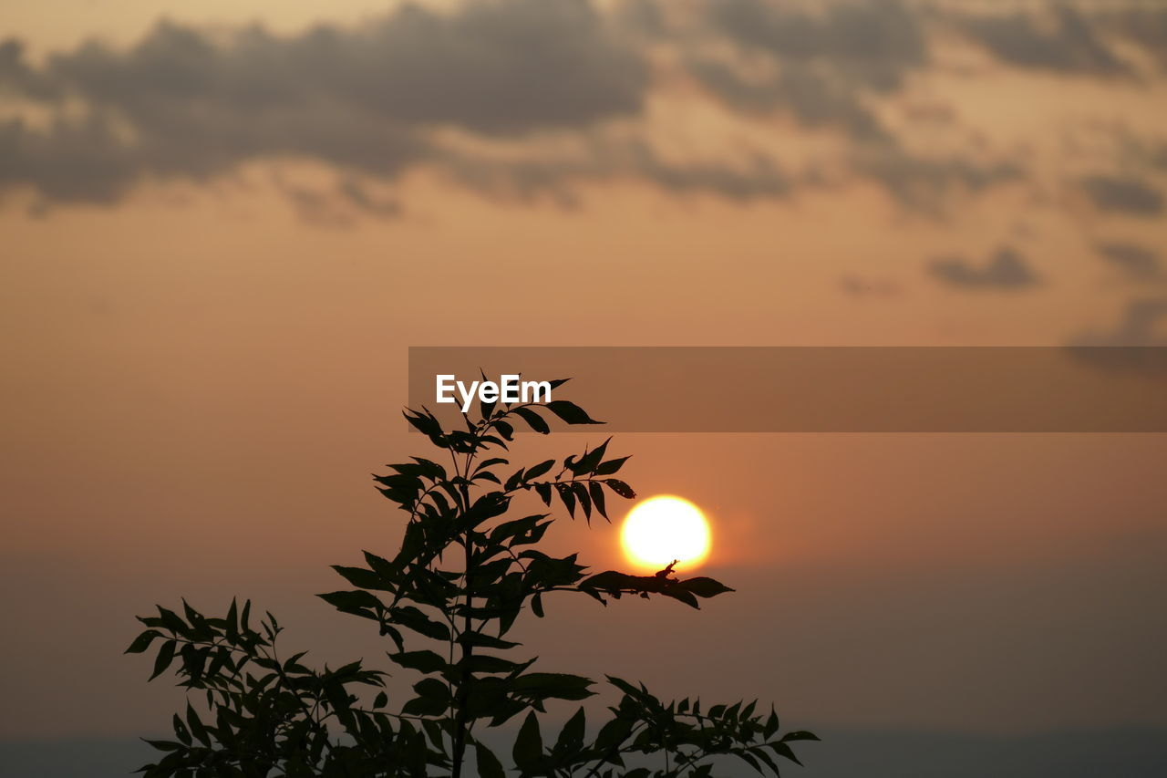 sunset, sky, beauty in nature, scenics - nature, orange color, silhouette, tranquil scene, tranquility, sun, plant, nature, idyllic, cloud - sky, growth, no people, outdoors, leaf, tree, sunlight, plant part, romantic sky