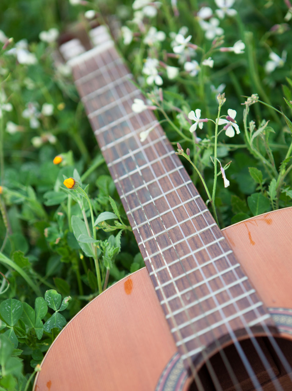 plant, growth, green color, close-up, string instrument, nature, leaf, musical instrument, plant part, day, music, no people, selective focus, guitar, acoustic guitar, outdoors, musical equipment, focus on foreground, arts culture and entertainment, beauty in nature
