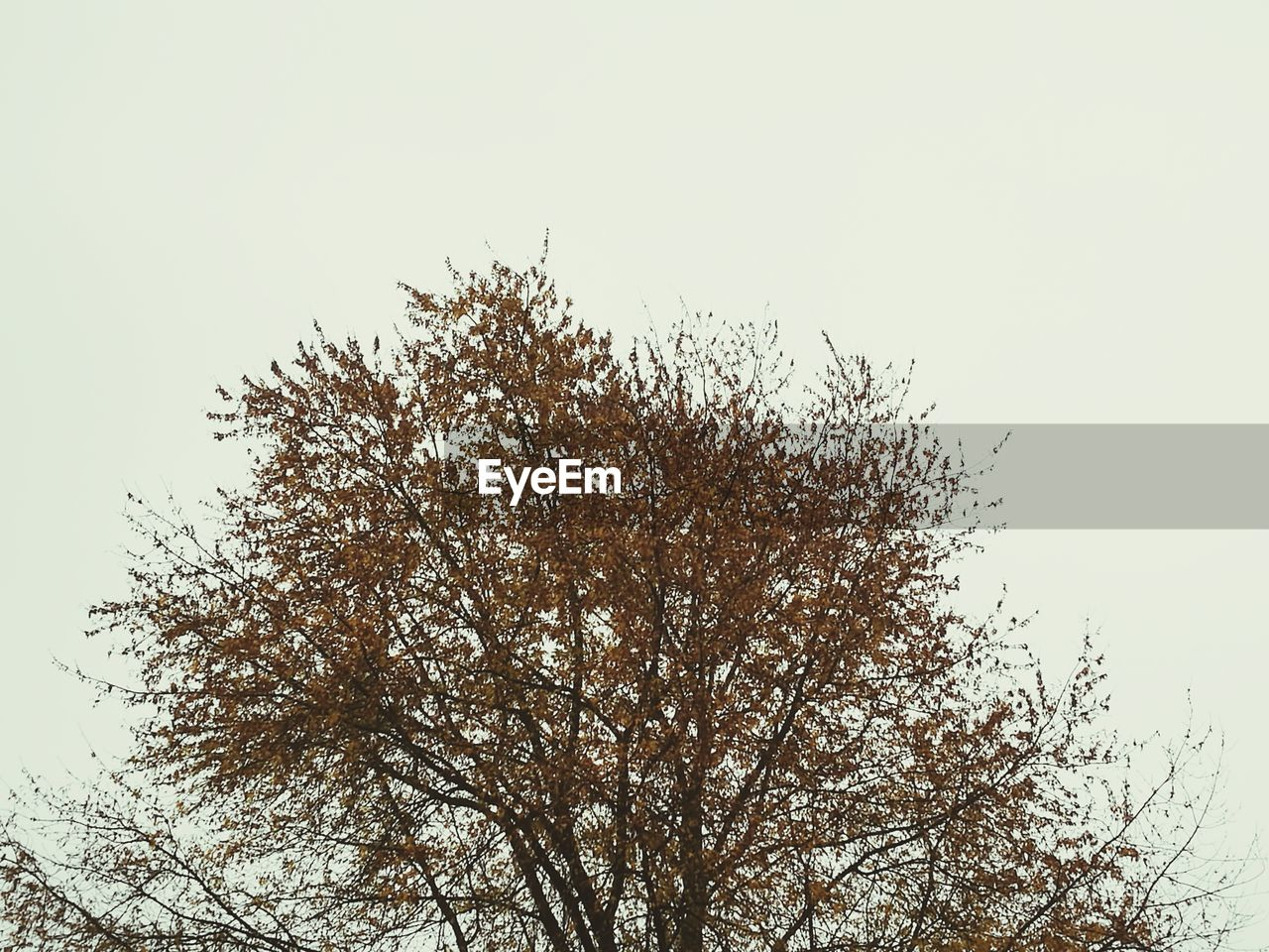 tree, sky, plant, low angle view, clear sky, branch, beauty in nature, nature, no people, growth, tranquility, copy space, day, outdoors, bare tree, scenics - nature, tranquil scene, autumn, non-urban scene, silhouette, treetop