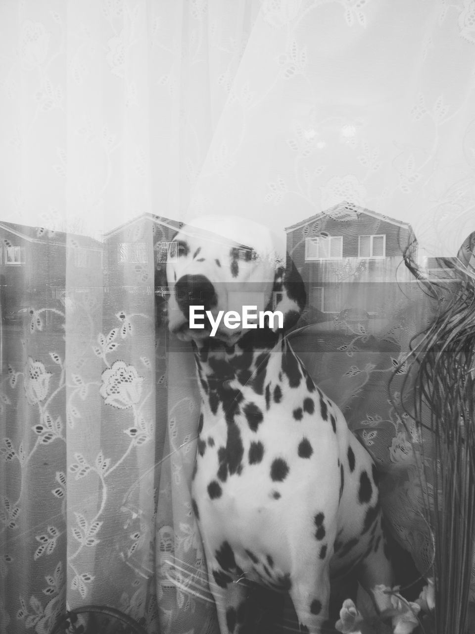 pets, domestic animals, dog, animal themes, mammal, no people, one animal, indoors, day, close-up