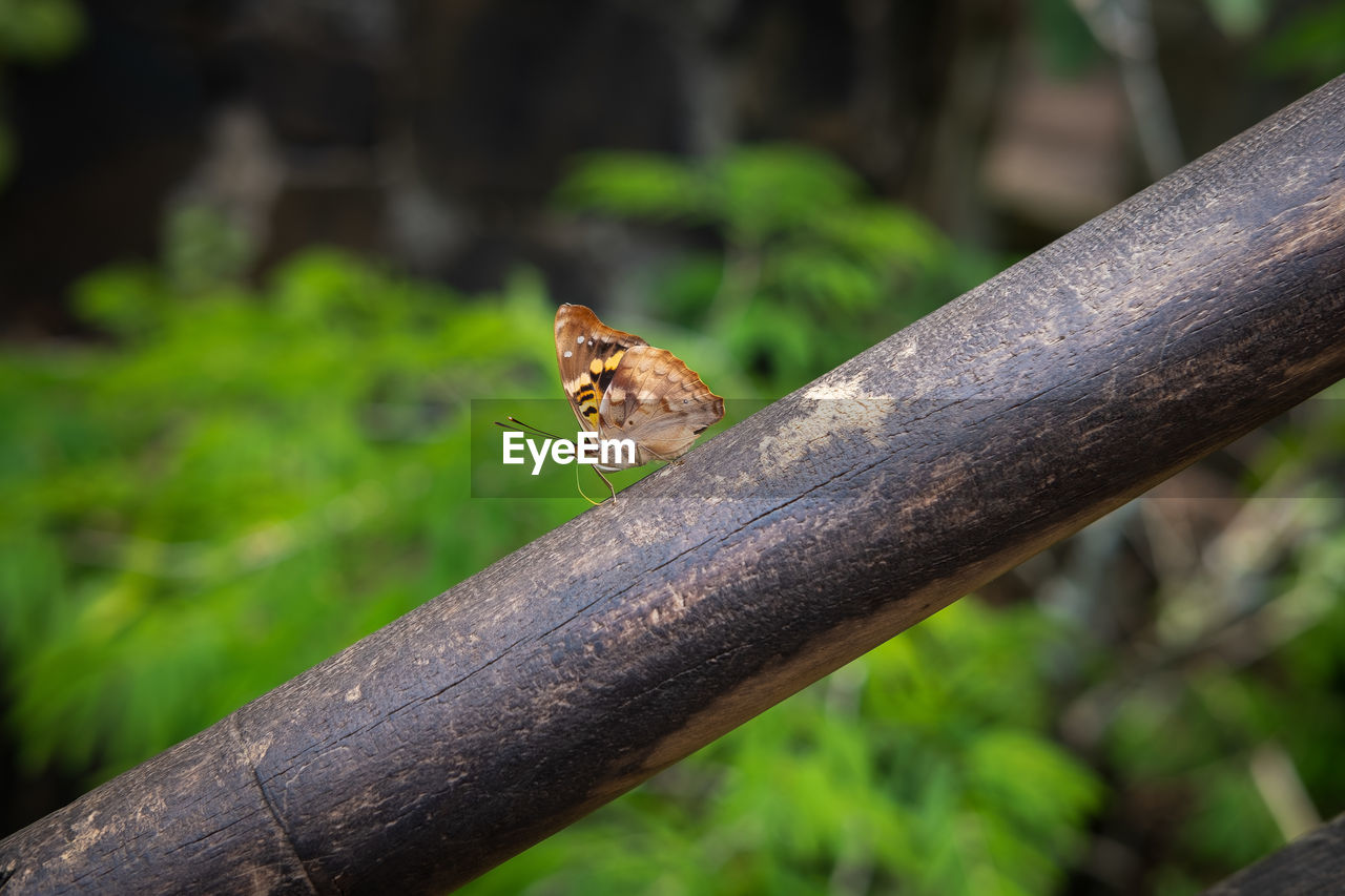 animal, focus on foreground, animals in the wild, one animal, animal themes, animal wildlife, no people, day, nature, tree, close-up, wood - material, plant, vertebrate, invertebrate, insect, branch, outdoors, perching, selective focus