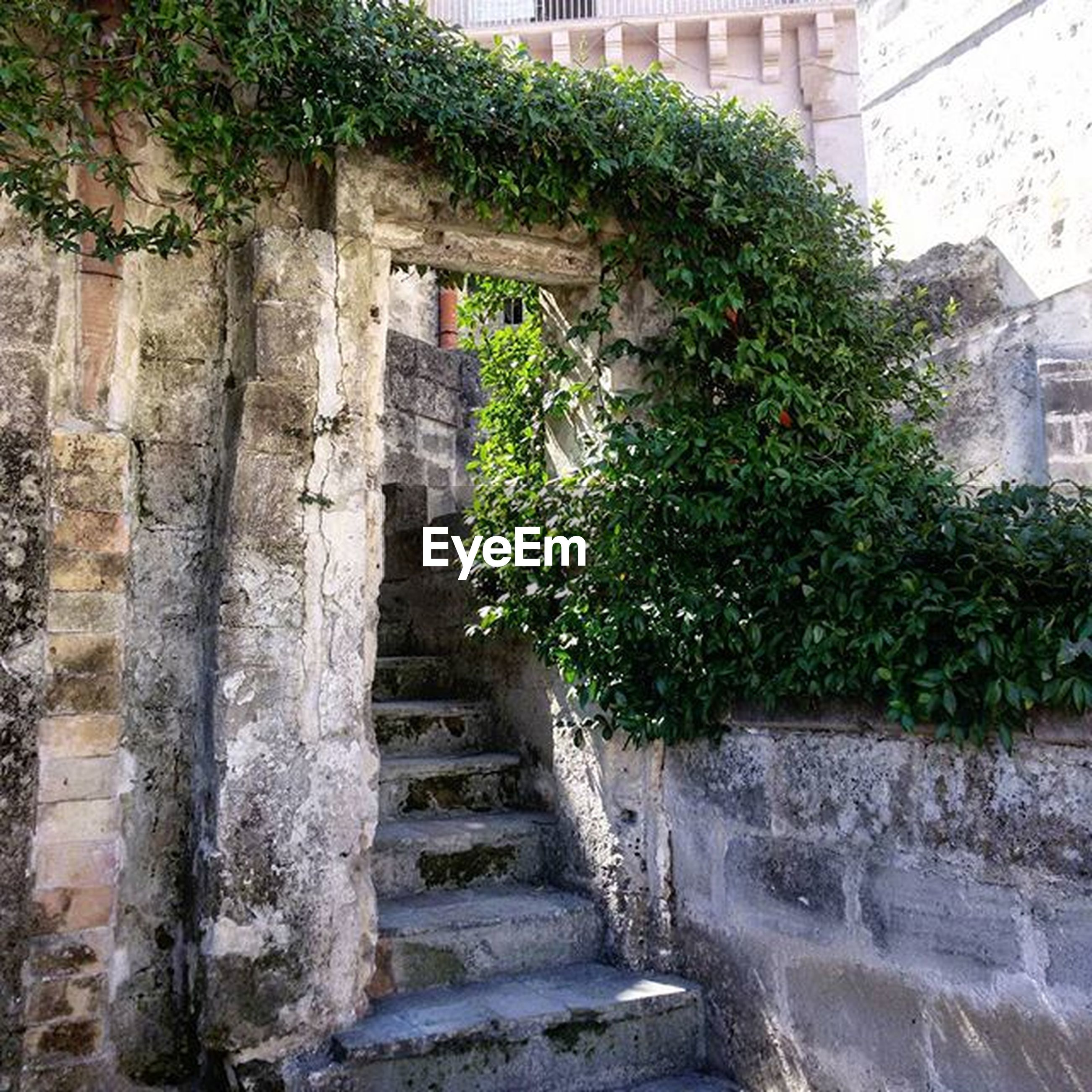 built structure, plant, architecture, building exterior, steps, growth, wall - building feature, house, door, green color, staircase, steps and staircases, wall, ivy, potted plant, entrance, old, window, tree, stone wall