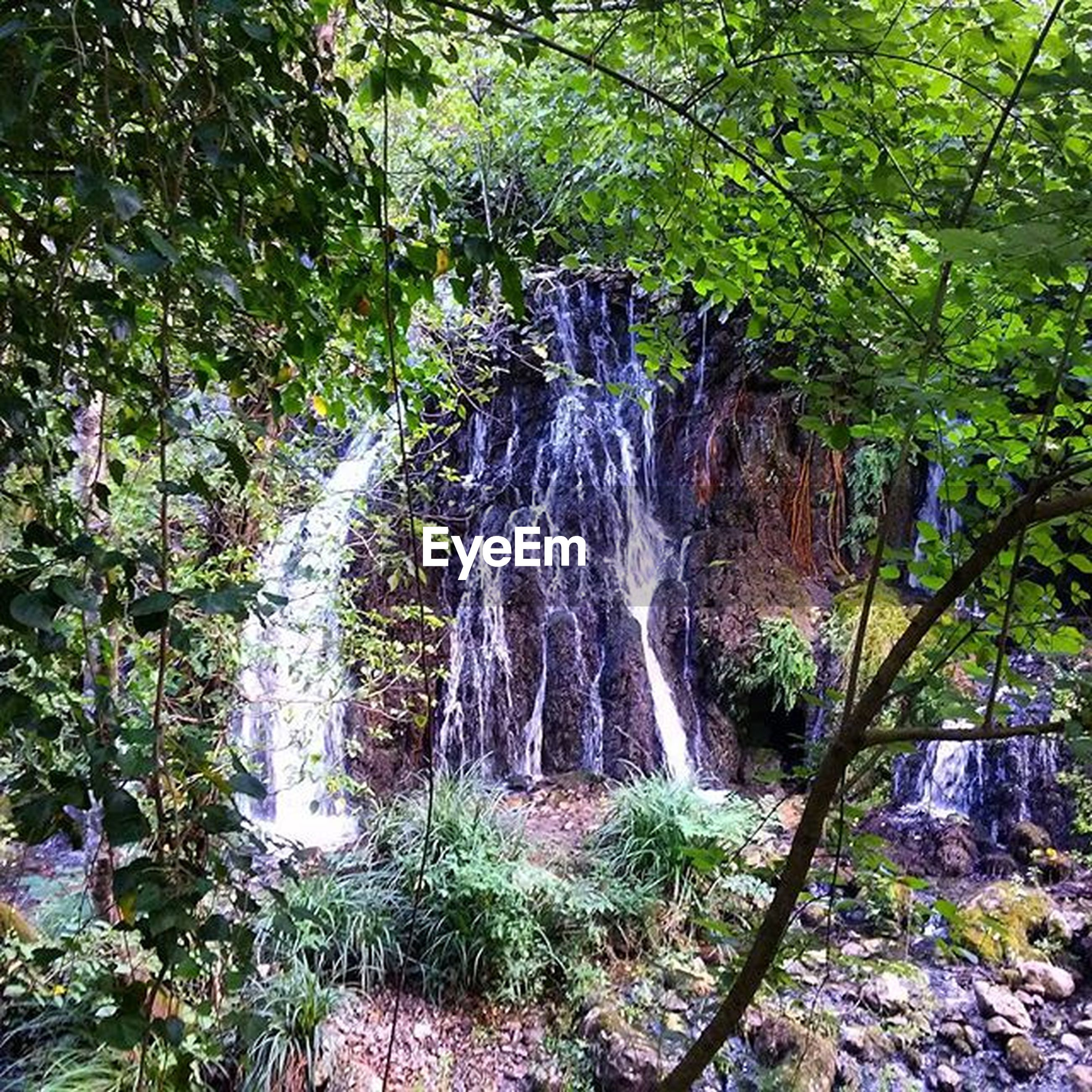 water, waterfall, beauty in nature, forest, tree, nature, flowing water, growth, motion, scenics, rock - object, plant, flowing, long exposure, tranquility, tranquil scene, day, idyllic, outdoors, no people