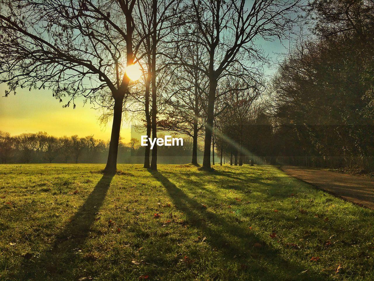tree, plant, sky, scenics - nature, tranquility, beauty in nature, grass, tranquil scene, sun, nature, sunlight, land, field, no people, non-urban scene, landscape, environment, sunset, sunbeam, idyllic, lens flare, outdoors, streaming