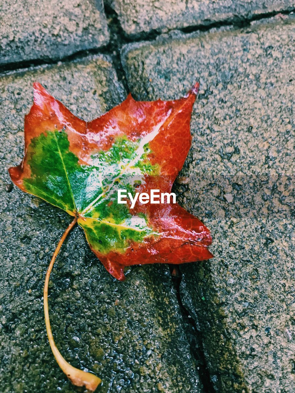 leaf, autumn, change, nature, day, outdoors, close-up, high angle view, maple leaf, beauty in nature, no people, fragility, green color, maple, red
