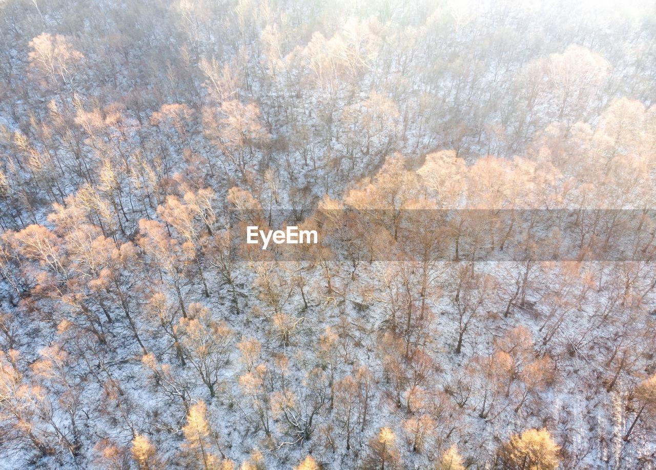FULL FRAME SHOT OF PINE TREE IN FOREST