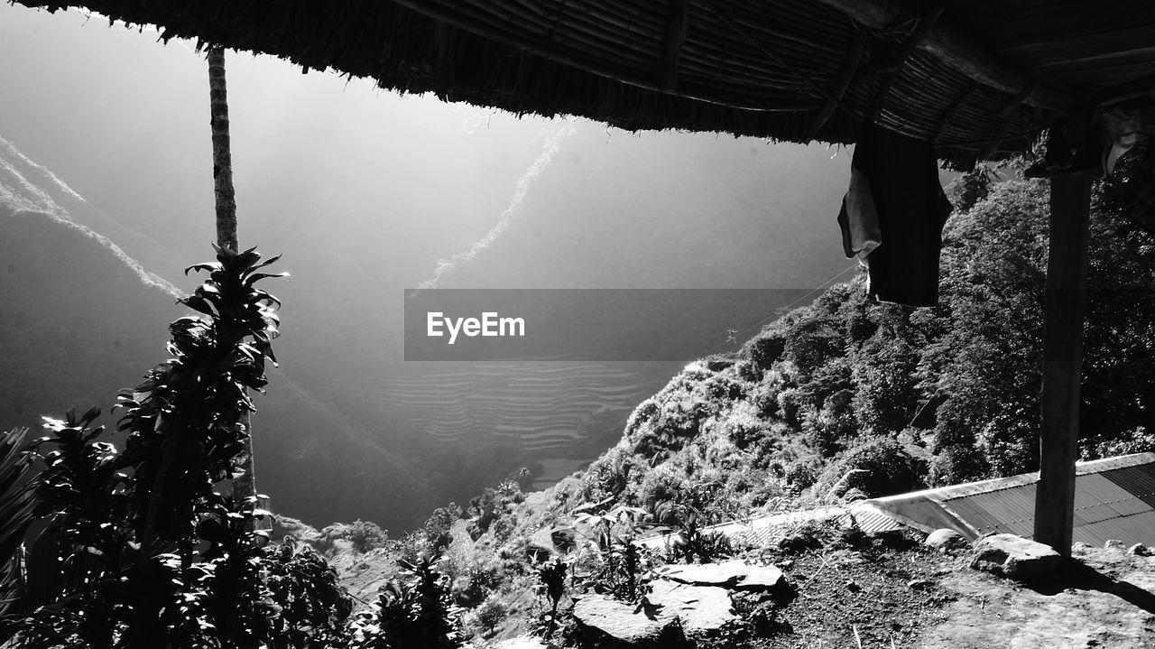 High angle view of rice terraced field seen through hut
