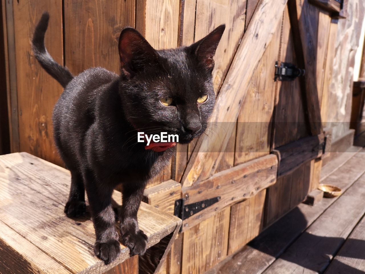 mammal, domestic, domestic animals, pets, animal, animal themes, cat, domestic cat, one animal, feline, wood - material, vertebrate, no people, whisker, relaxation, black color, day, seat, sitting, indoors