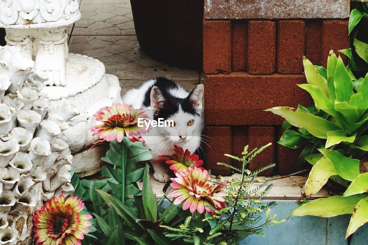 Alert cat in yard