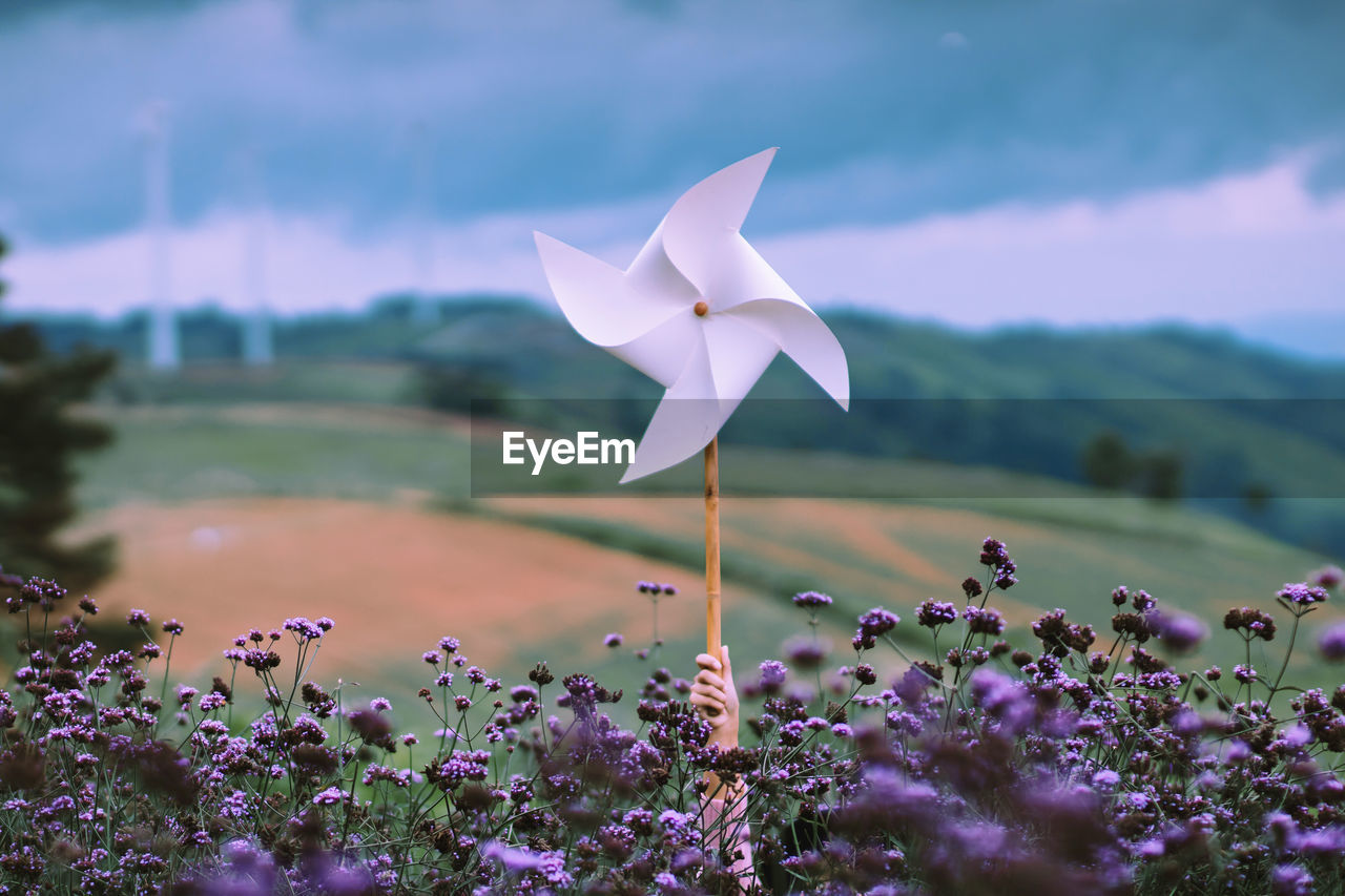 Cropped hand holding pinwheel by blooming flowers