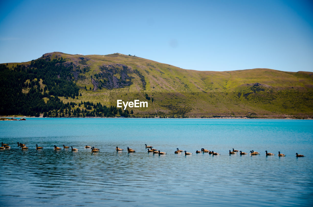 Flock of birds in lake against mountains