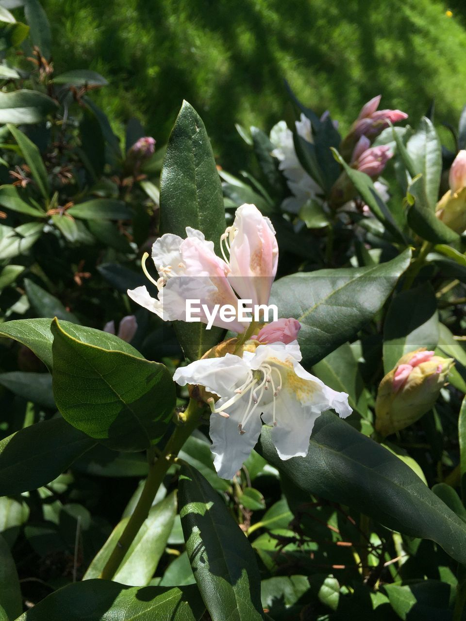 growth, beauty in nature, plant, flower, flowering plant, freshness, petal, close-up, vulnerability, fragility, leaf, plant part, flower head, no people, inflorescence, day, nature, green color, focus on foreground, white color, outdoors, pollen