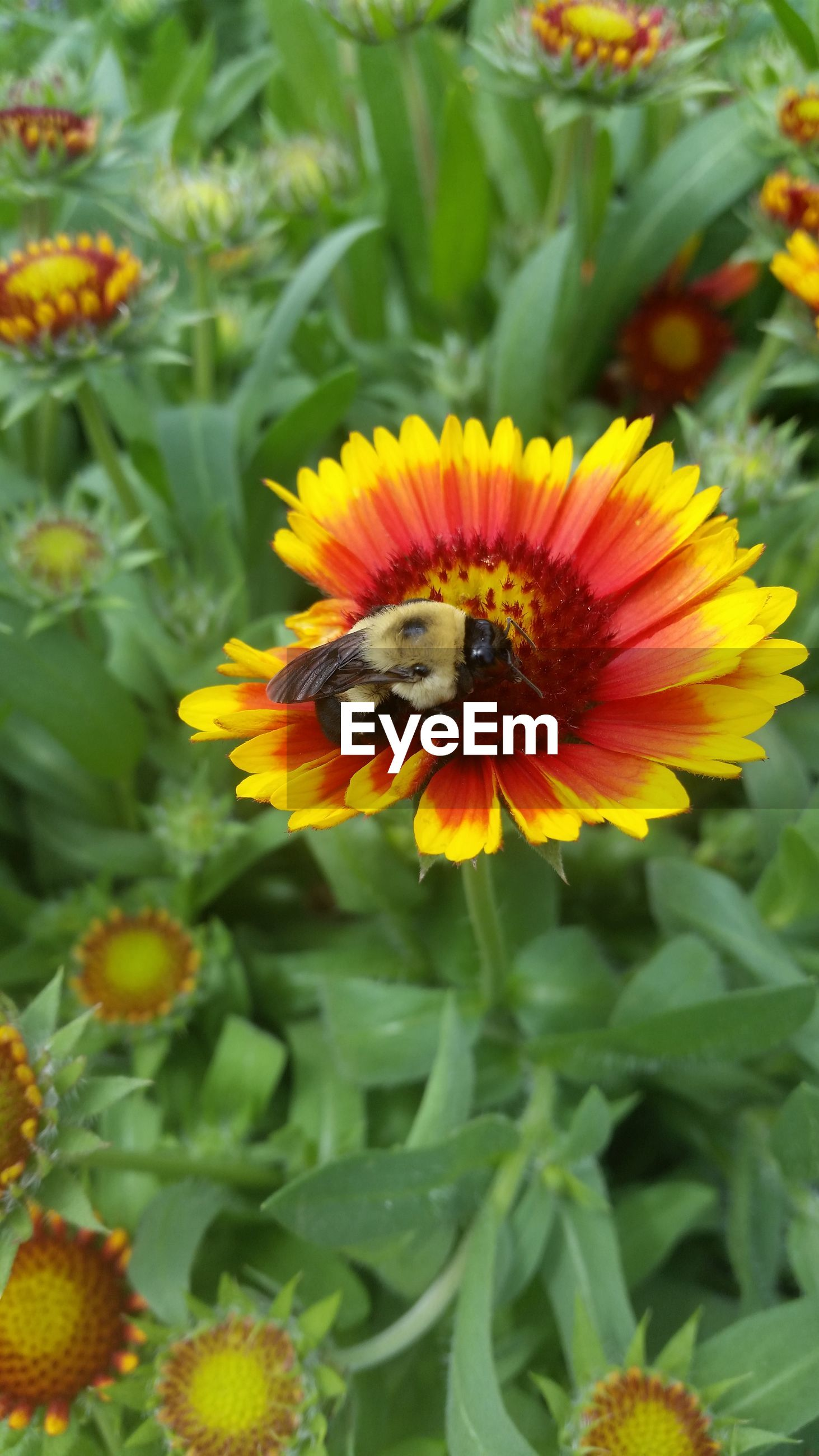 flower, insect, animal themes, animals in the wild, petal, freshness, one animal, wildlife, flower head, fragility, pollination, yellow, growth, beauty in nature, symbiotic relationship, plant, pollen, blooming, close-up, focus on foreground