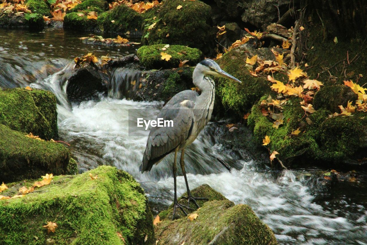 water, rock - object, nature, rock, bird, motion, no people, waterfall, outdoors, beauty in nature, day, animal themes, animals in the wild, gray heron