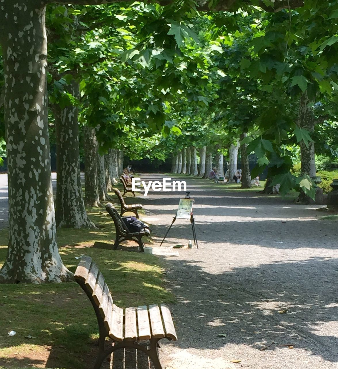 Benches by road amidst trees in park