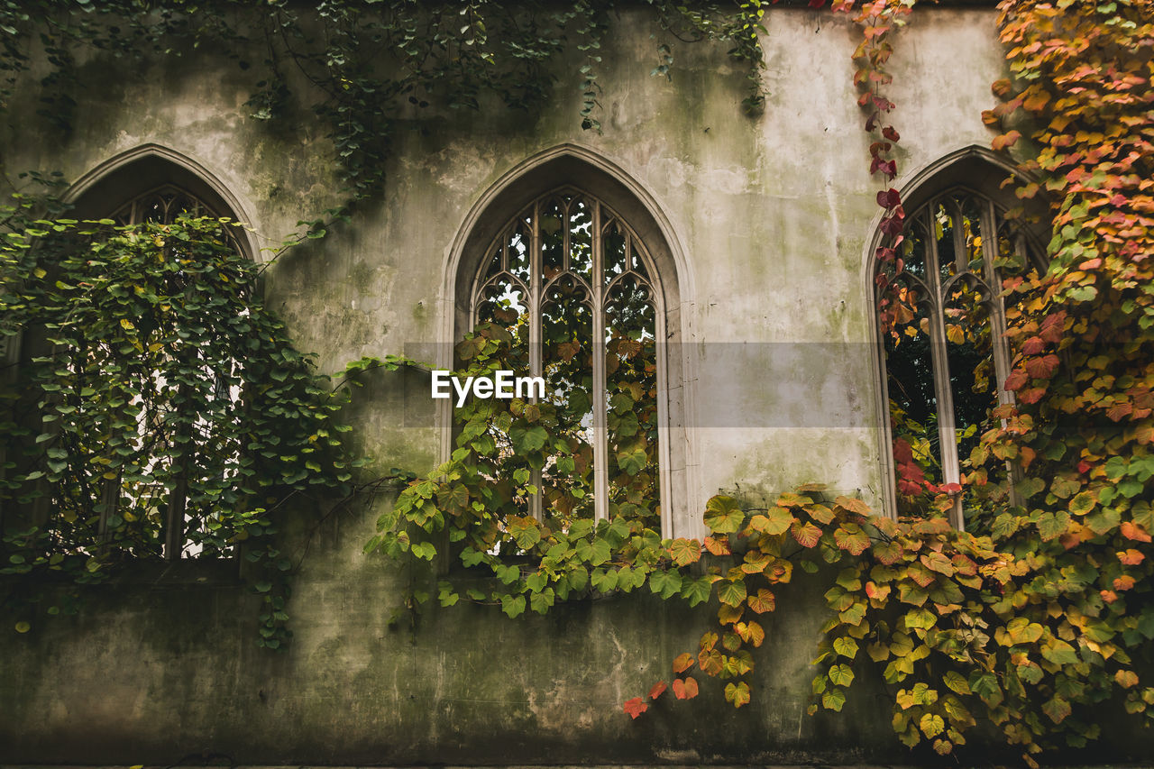 arch, built structure, architecture, plant, window, day, no people, nature, leaf, building exterior, plant part, growth, building, outdoors, tree, green color, reflection, autumn, ivy, history, arched