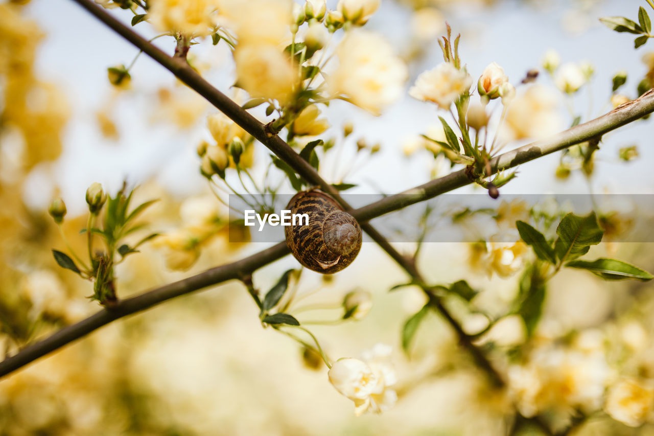 plant, growth, tree, flower, flowering plant, branch, close-up, nature, fragility, beauty in nature, freshness, vulnerability, no people, focus on foreground, day, selective focus, plant part, outdoors, leaf, invertebrate