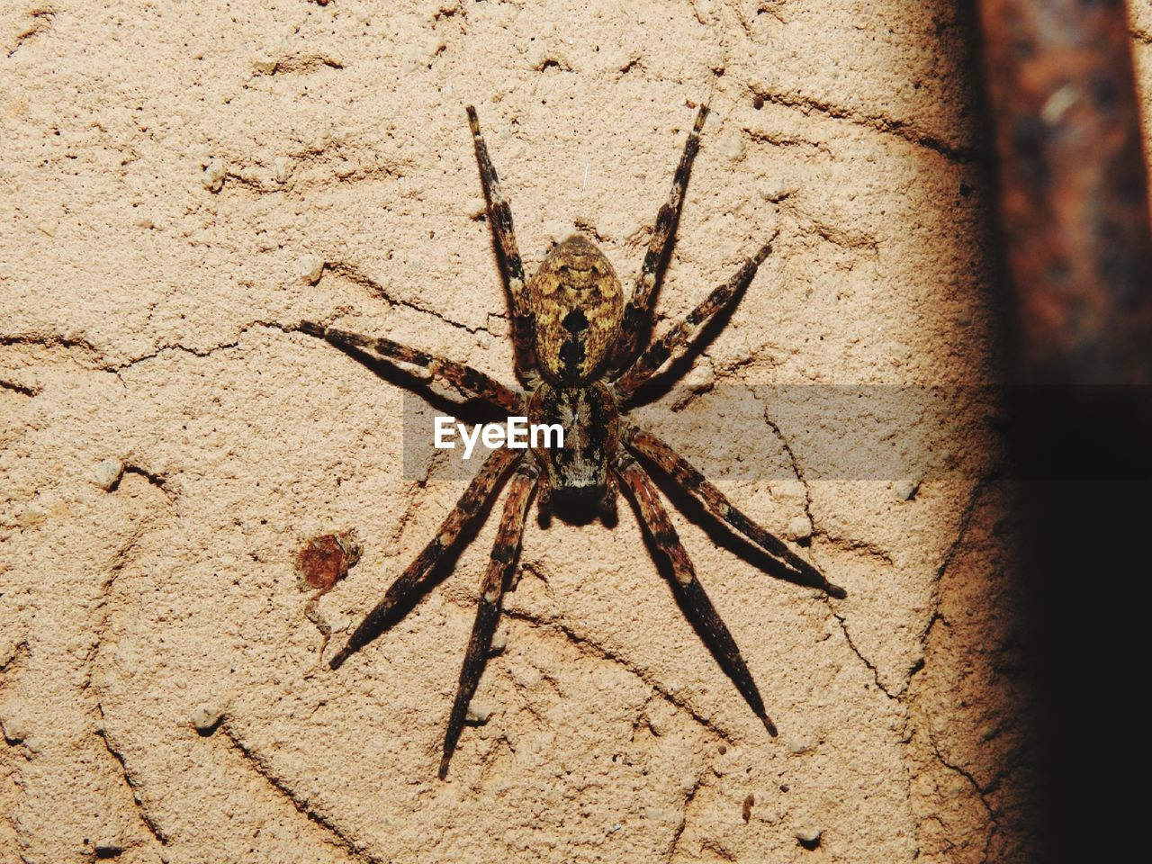 arachnid, invertebrate, animal, animal wildlife, one animal, animal themes, arthropod, insect, animals in the wild, spider, close-up, no people, day, outdoors, nature, animal leg, solid, zoology, wall - building feature, full length, poisonous