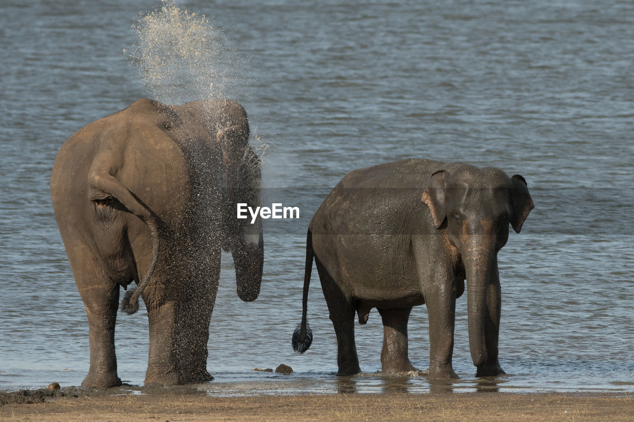 ELEPHANT STANDING IN RIVER