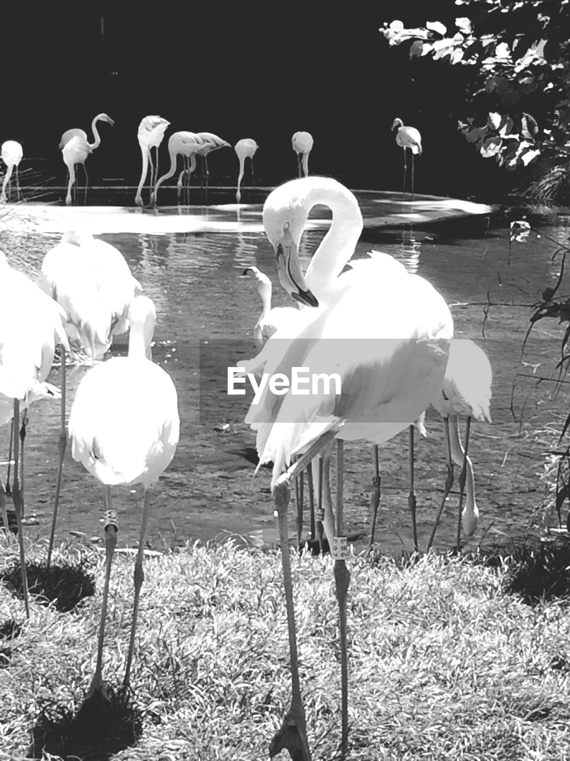 animal themes, animals in the wild, bird, animal wildlife, white color, nature, outdoors, day, no people, water, sunlight, togetherness, beauty in nature, crane - bird, grass, large group of animals, flamingo, swan
