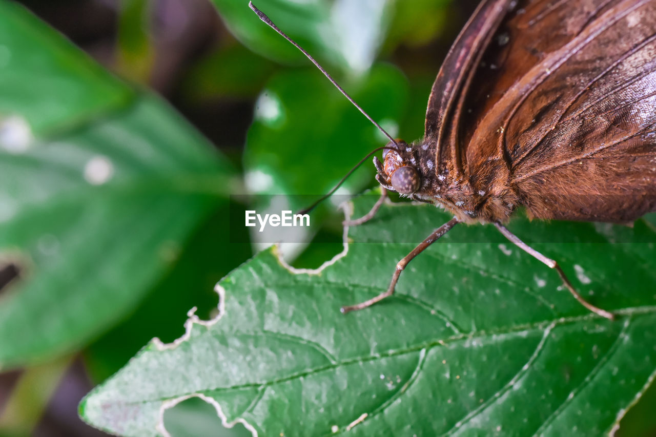 one animal, leaf, insect, animal themes, animals in the wild, nature, close-up, no people, day, green color, outdoors, beauty in nature
