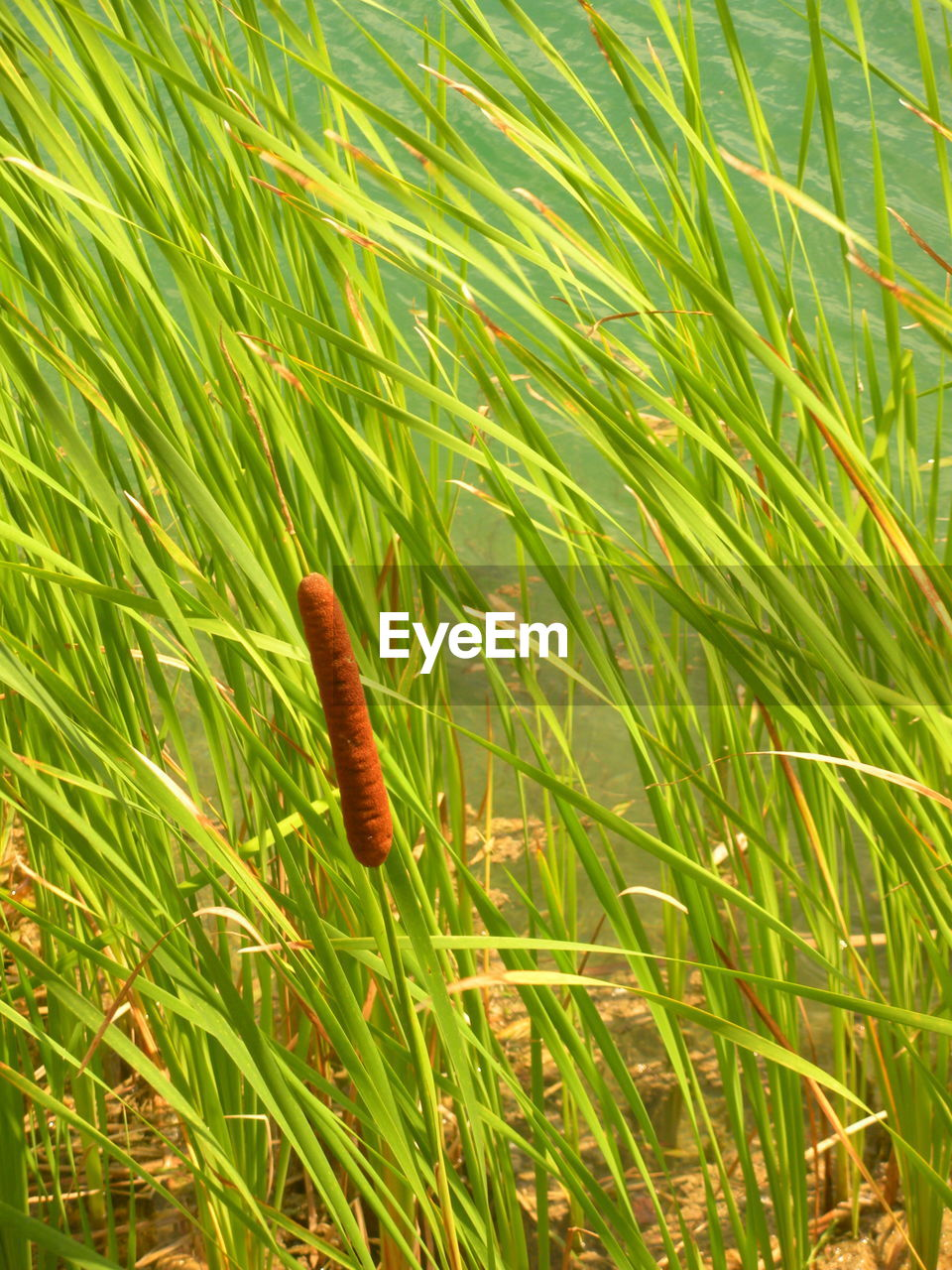 plant, green color, growth, grass, nature, beauty in nature, close-up, no people, day, land, field, outdoors, tranquility, brown, fragility, selective focus, vulnerability, freshness, plant part, sunlight, blade of grass