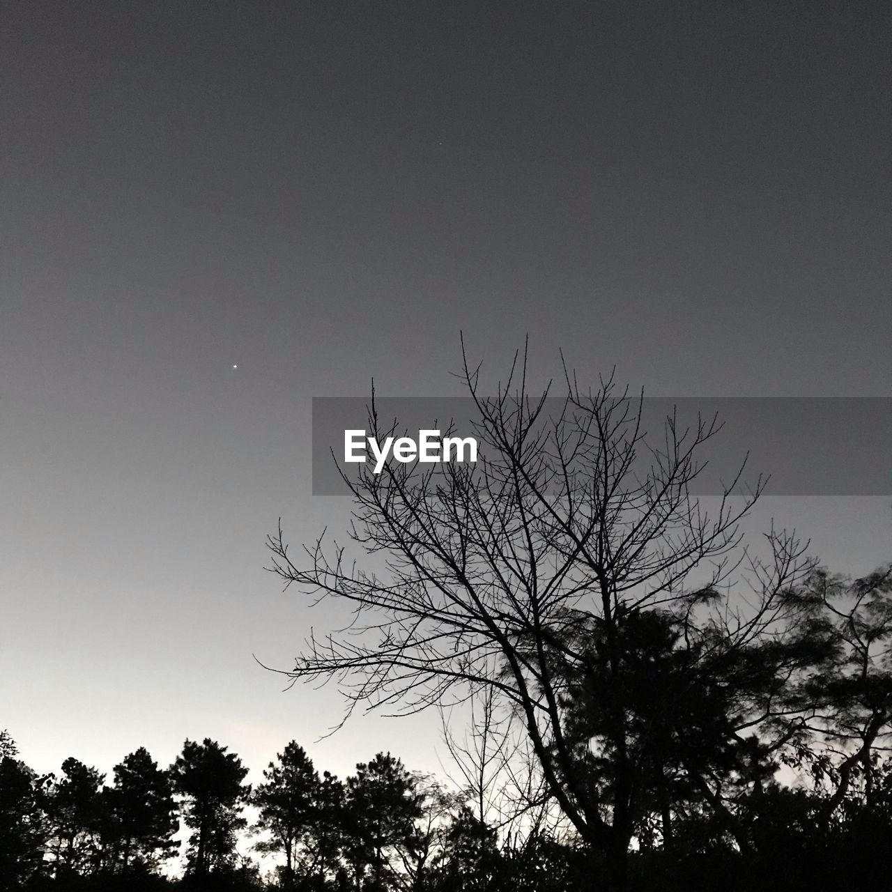tree, sky, plant, silhouette, tranquility, beauty in nature, low angle view, nature, scenics - nature, bare tree, no people, tranquil scene, branch, growth, copy space, clear sky, moon, outdoors, dusk, night, treetop