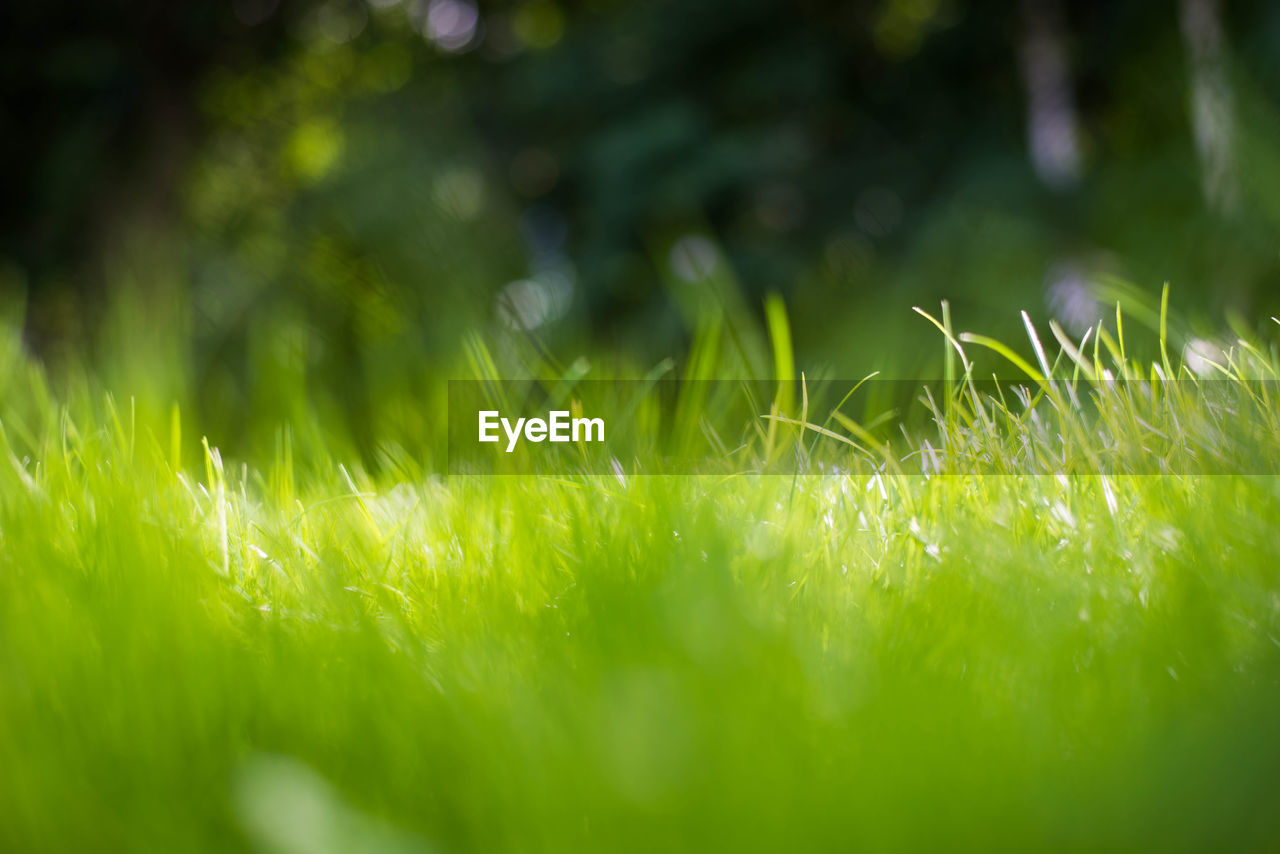 grass, nature, growth, field, outdoors, close-up, no people, day