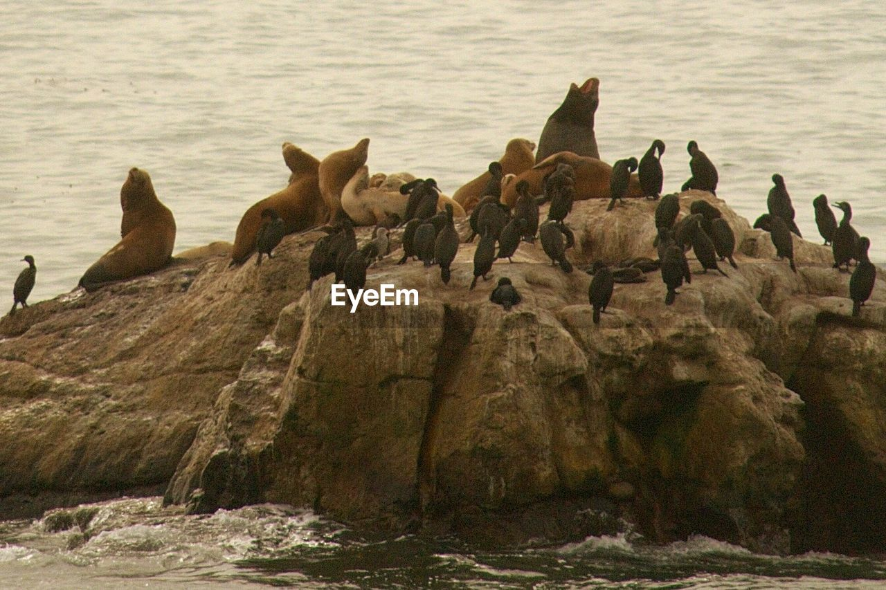Seals and cormorants on rock formations by sea