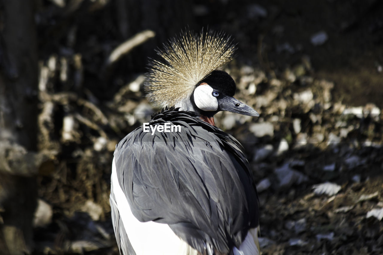 bird, animals in the wild, animal themes, vertebrate, animal wildlife, animal, one animal, focus on foreground, day, nature, no people, close-up, beak, outdoors, crane - bird, land, field, side view, perching, sunlight