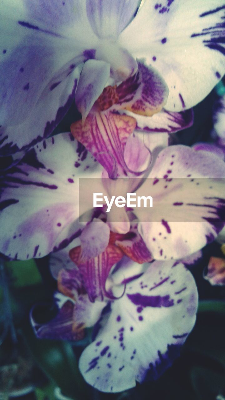 flower, flowering plant, fragility, vulnerability, freshness, plant, petal, inflorescence, beauty in nature, close-up, flower head, growth, nature, no people, day, selective focus, pollen, botany, focus on foreground, outdoors, springtime, purple, iris - plant