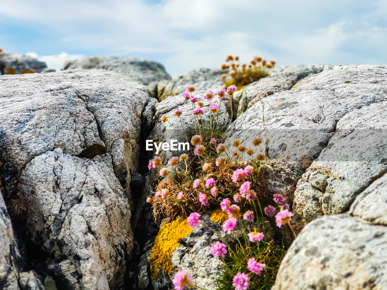 Close-Up Of Flowering Plants By Rocks Against Sky