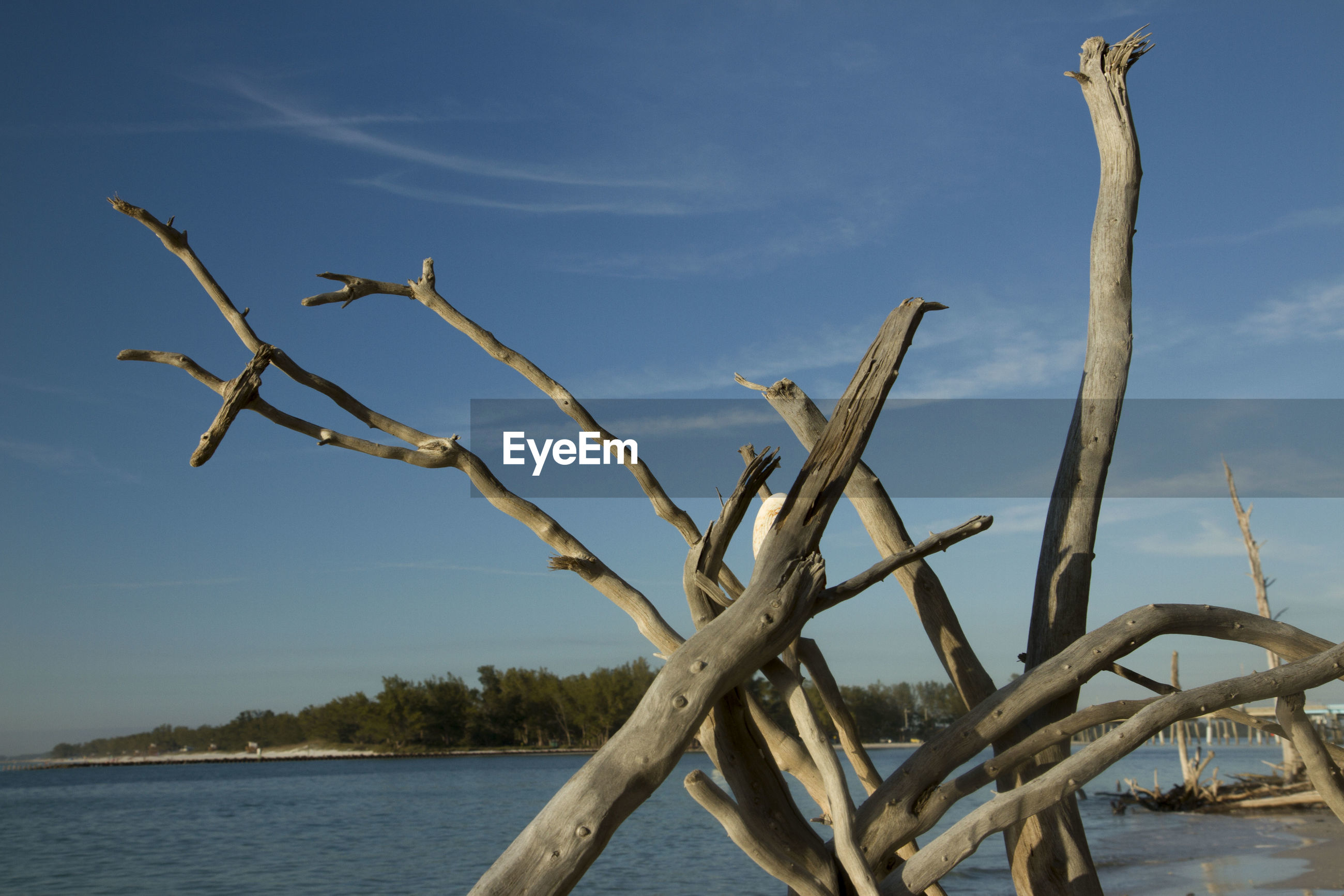VIEW OF TREE IN LAKE AGAINST SKY