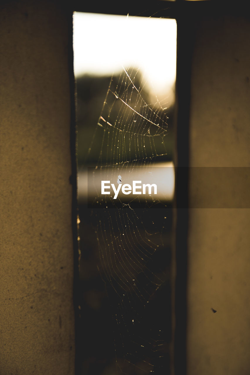 spider web, close-up, indoors, focus on foreground, no people, fragility, selective focus, nature, wall - building feature, vulnerability, window, wall, wet, day, drop, glass - material, pattern, built structure, raindrop