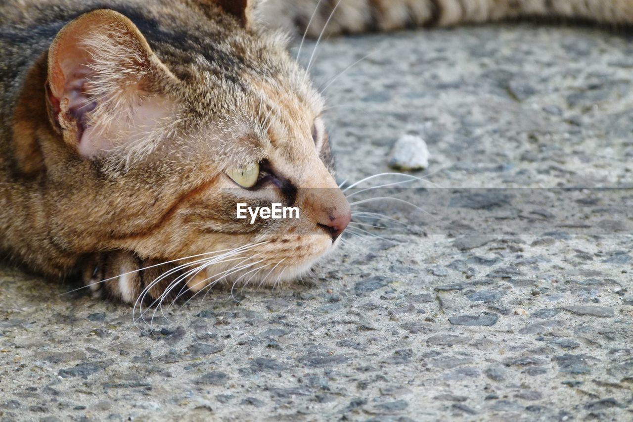 one animal, domestic cat, animal themes, feline, whisker, mammal, pets, domestic animals, close-up, no people, day, outdoors