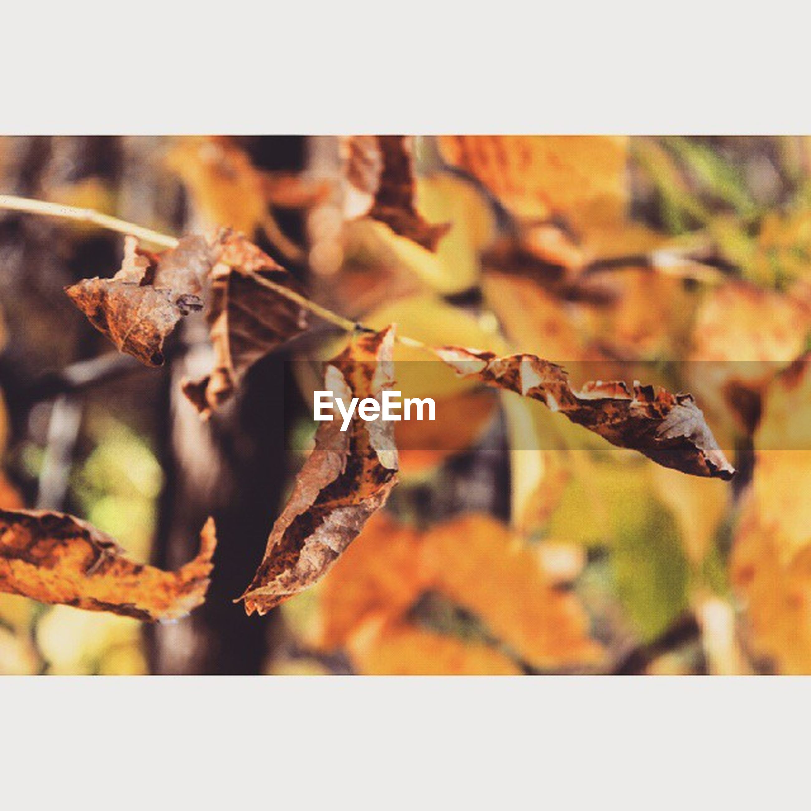 transfer print, auto post production filter, close-up, focus on foreground, dry, leaf, nature, branch, selective focus, autumn, twig, dead plant, season, growth, plant, tree, outdoors, day, no people, dried plant